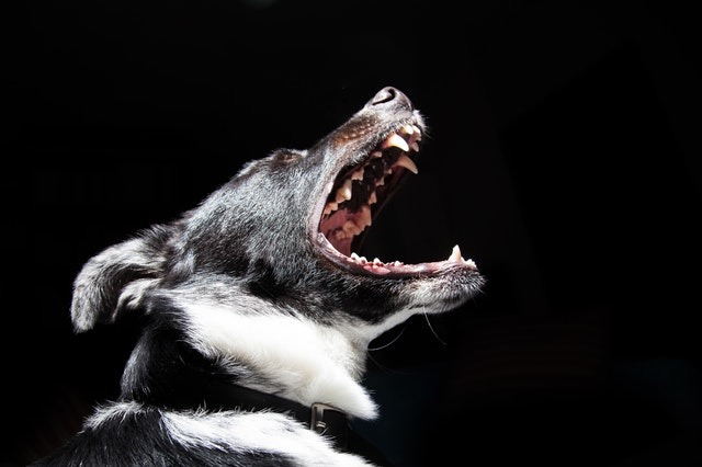 Preventing Dog Bites In Phoenix